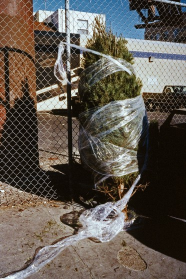 image from Left Behind series: Christmas tree wrapped in plastic, against a fence