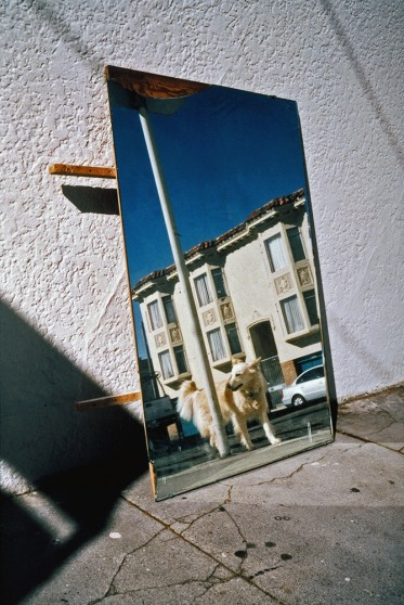 image from Left Behind series: mirror on the street reflecting a dog