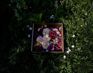 Roses and Wild Morning Glories, from the Nurturing Time collection