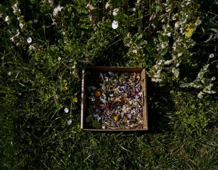 Dried Flower Box With Morning Glories, Poppy Stalks and Yarrow, from the Nurturing Time collection